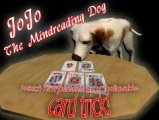 JoJo the Mindreading Dog by Dave Arch